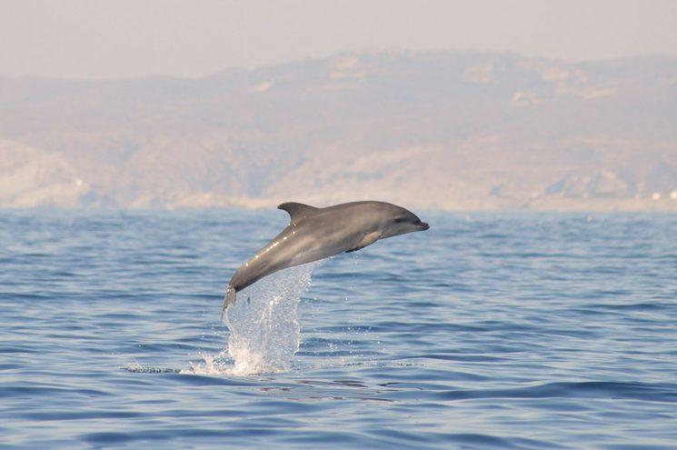 Dofins de Tramuntana Submon